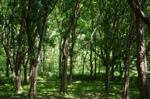 若葉の木陰