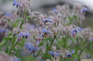 名も知らぬ花とミツバチ