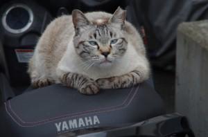 バイクのシートがお気に入りにゃ