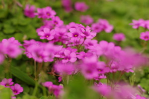 花の季節になりましたね