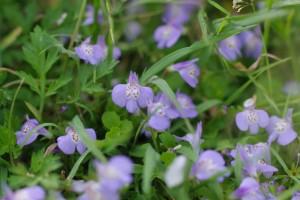 雑草にも小さな花が咲いてます