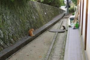 猫もゾロゾロ出てきます