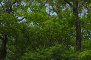 萌えるような緑ですね